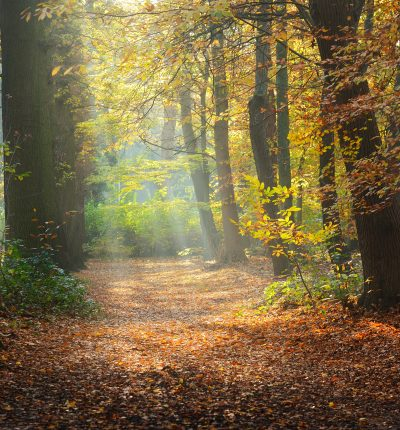 Stock image of an autumn forest