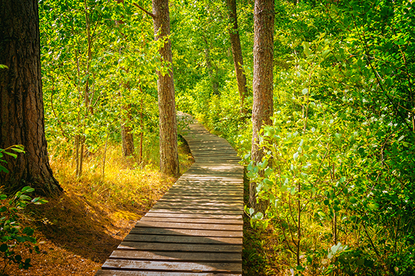 Stock image of wooden boardwalk through wooded greenery