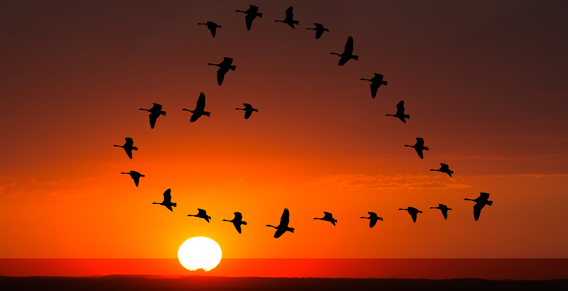 Stock image of cranes flying in heart shape against red sunset sky